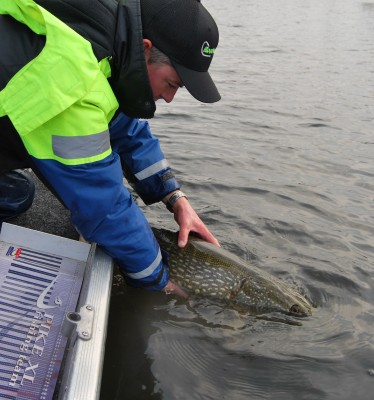 Ook hier catch and release...
